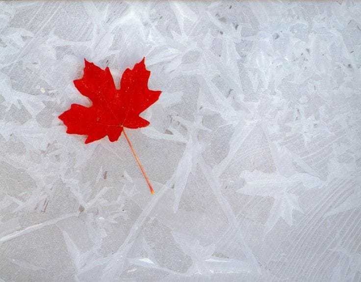 Canada flag Leaf